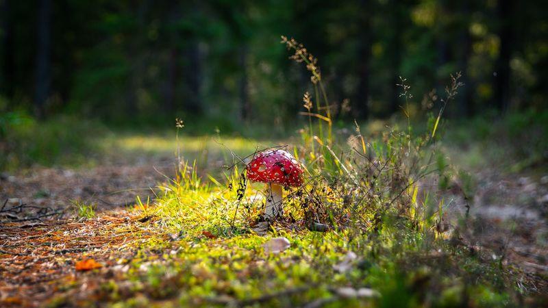 Cursus Weetjes en verhalen over paddenstoelen (3 sessies) - Sessie 1