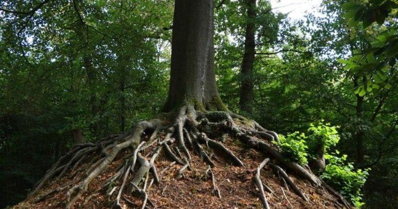 Historische bomenwandeling