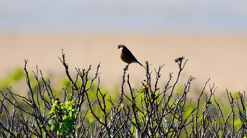86 vogelsoorten gespot op 1 mei 2020