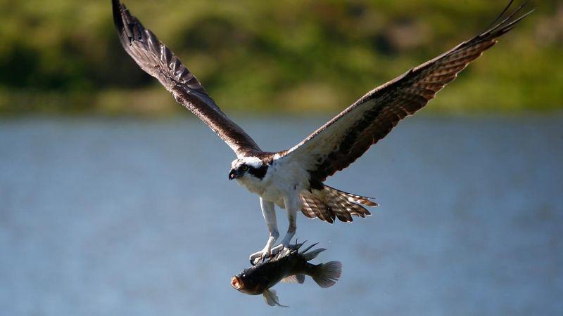 Cursus: watervogels in de winter
