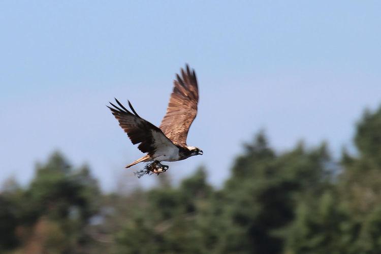 24 uur vogels spotten in het Schulensbroek (34e editie)