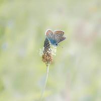 Cursus: Natuurfotografie voor groentjes
