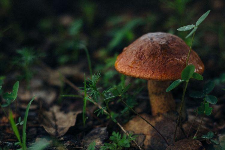 Cursus: Weetjes en verhalen over paddenstoelen (najaar 2020)