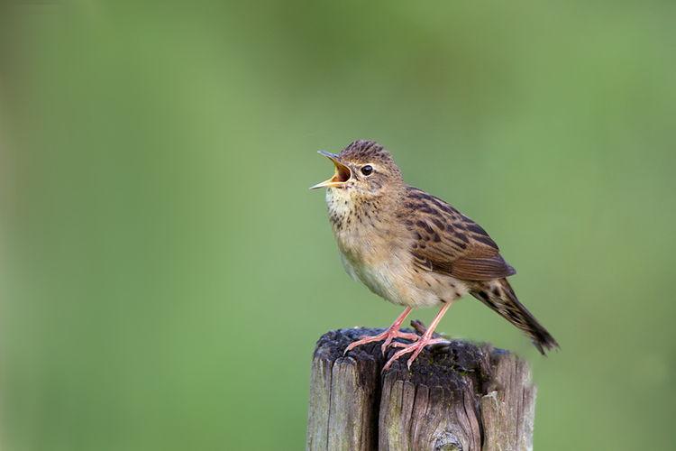 Cursus: bijzondere broedvogels Schulensbroek